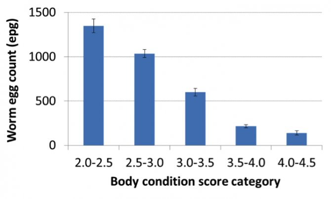 Figure 1: Worm egg count (average ± 68% confidence intervals) of cross-bred ewes based on body condition score category during the period pre-lambing to weaning.