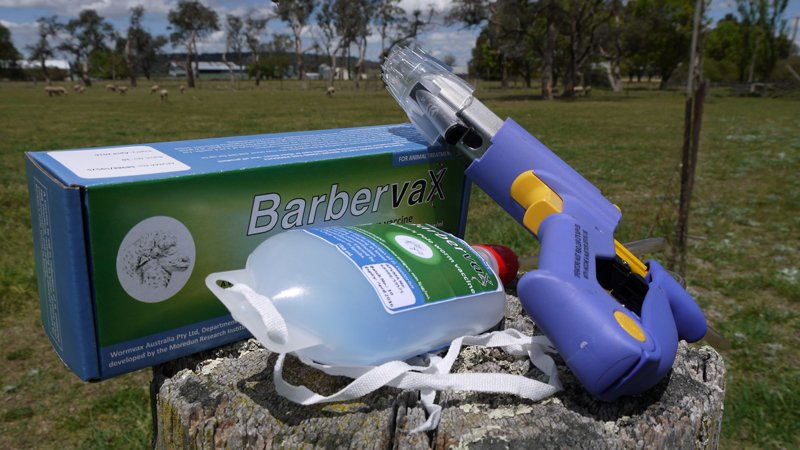 Barbervax?a new approach to barbers pole worm control