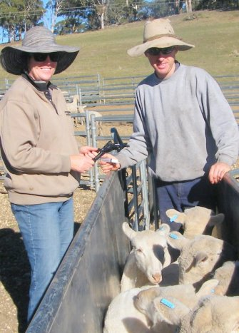 Elizabeth Jackson and Mitchell Hope doing the first stage of a Drench Resistance Test.
