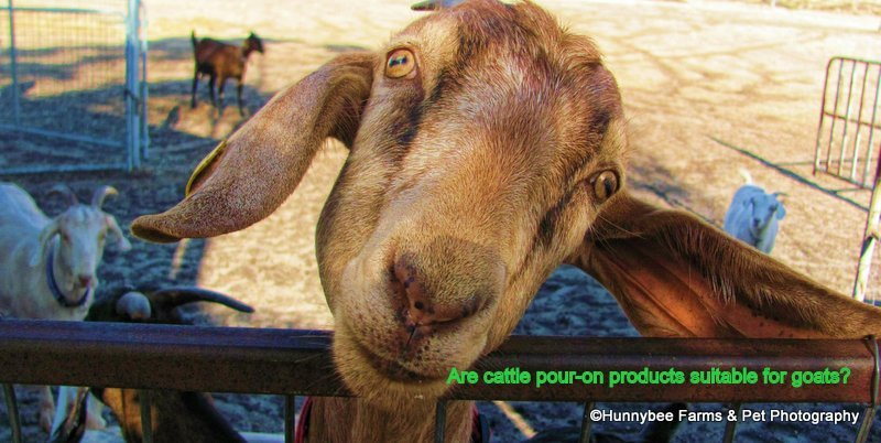 Drenches for goats: using cattle and horse anthelmintics